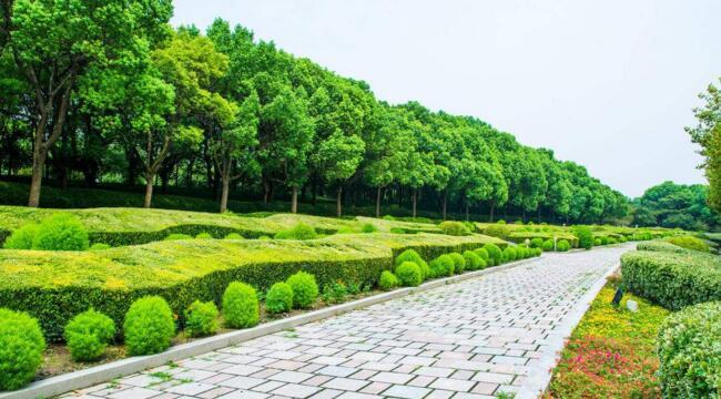 多彩绿化提升济南城市形象
